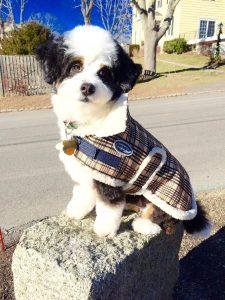 gobbs-tiny-bd-maura-dog